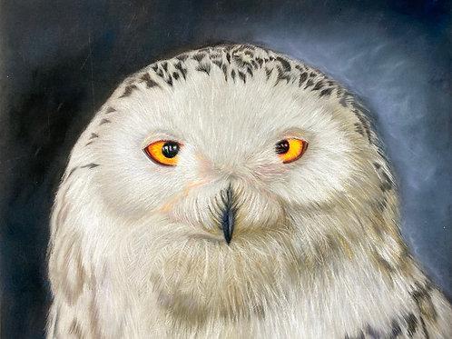 """The Polar Knight"" Snowy Owl Limited Edition Print"