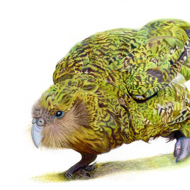 Kenneth the Kakapo
