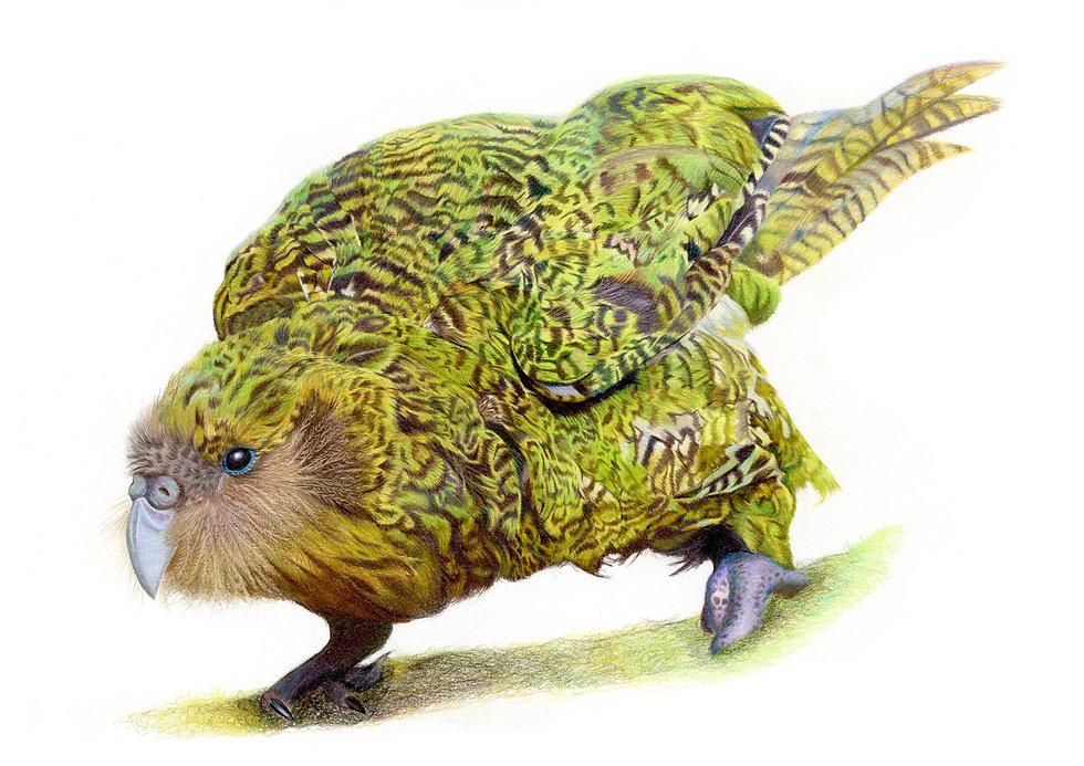 GreenBird3-A4.jpg