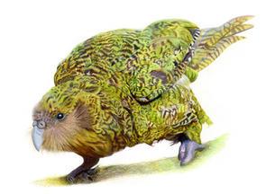 """Kenneth the Kakapo"""