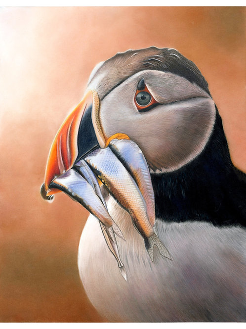 """""""After the dive"""" Limited Edition Puffin Print"""