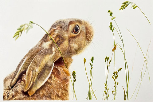 'Talking to the Moon' Hare - Limited Edition Fine Art Print