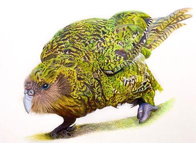 Kenneth the Kakapo