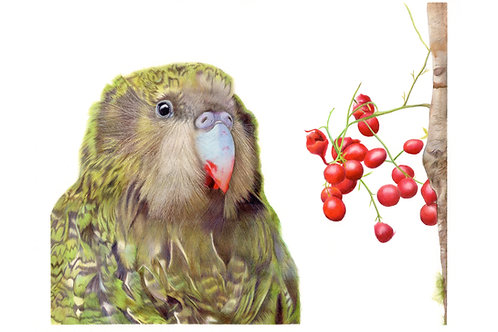 Kakapo and Berries Limited Edition Print