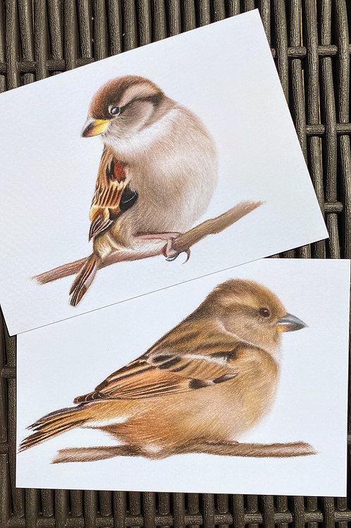 Sparrow Postcard Set
