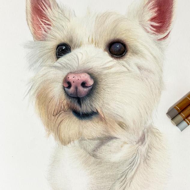 Baggy Woof