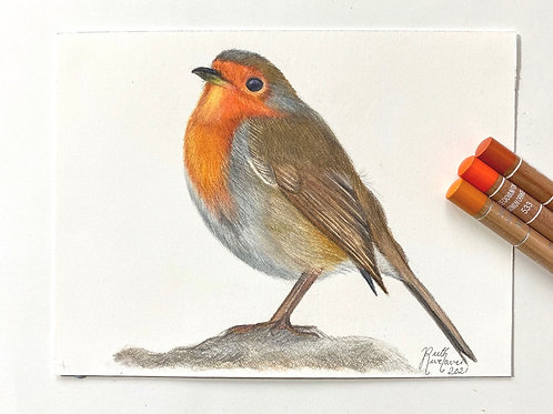 Robin Original Drawing