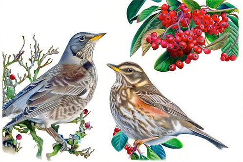 Winter Friends Limited Edition Fine Art Print