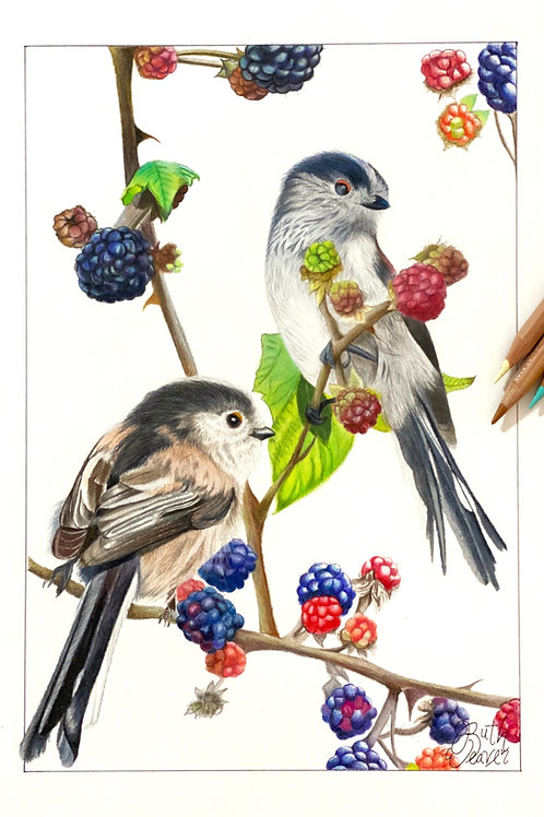 Long tailed Tits and Brambles Limited Edition Print