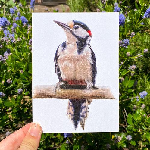 Great-Spotted Woodpecker Postcard