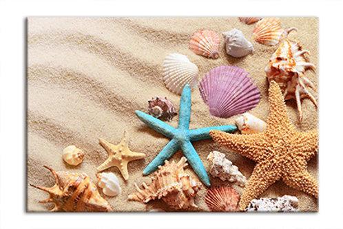 Shells on Beach 5 Blue Star