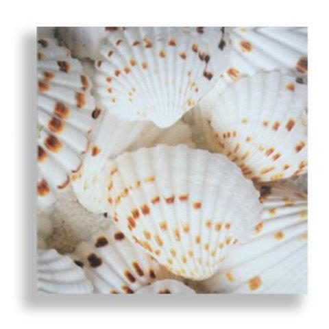 Shells White