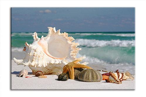 Shells on Beach 4