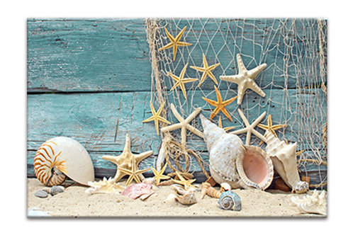 Shells by Weathered Board 2