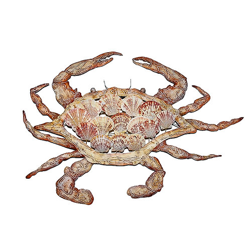 Crab with Shells