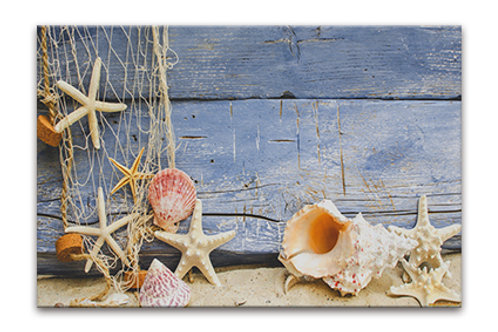 Shells by Weathered Board 1
