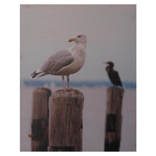 Seagull 1 Medium
