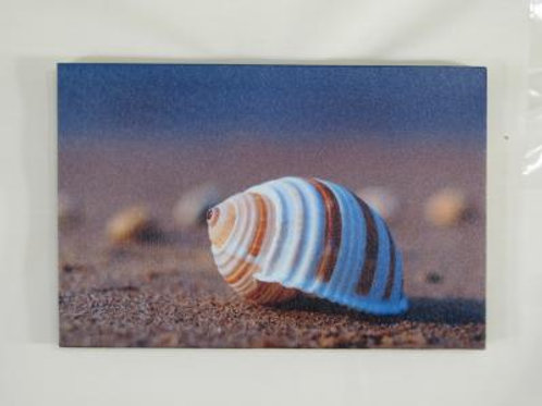 Striped Shell 1