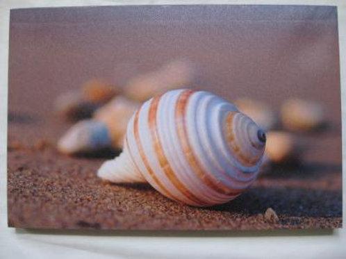 Spiral Shell