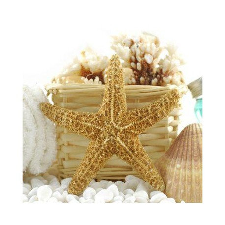 """Set of Two Starfish, Shells and Corals in Basket 16""""x16"""""""