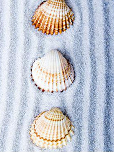 Three Shells