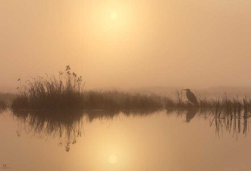 La quiétude du marais