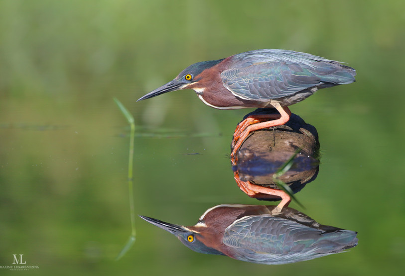 'Miroir miroir'