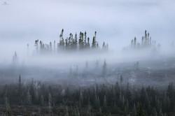 Forêt Québec