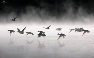 Migration d'automne
