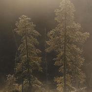 Des silhouettes dans la brume