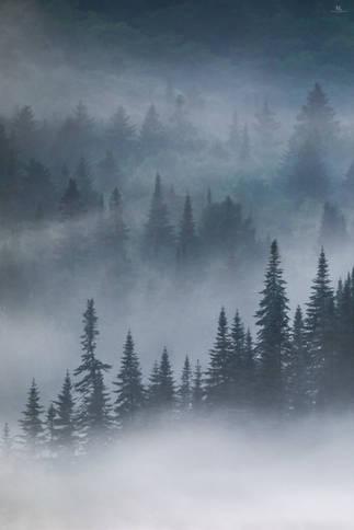 La forêt sauvage