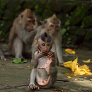 Monkey forest, Ubud, Indonesia