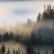 L'aube sur la forêt boréale.