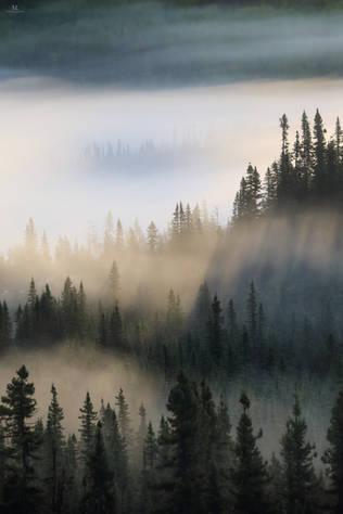 L'aube sur la forêt boréale