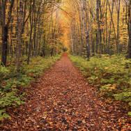 Chemin d'automne