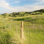 Lac du Bois grasslands at golden hour