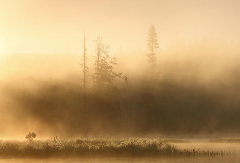 L'aube brumeuse