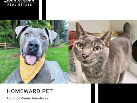 Furry Friends Friday Pets of the Week! 10.22.21