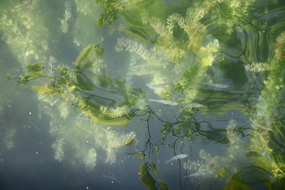 flowers under water Culture tab.jpg