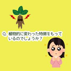 パクチー🌿なぜなに相談室📞初級編②