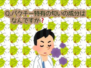 パクチー🌿なぜなに相談室📞初級編③