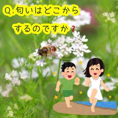 パクチー🌿なぜなに相談室📞初級編④