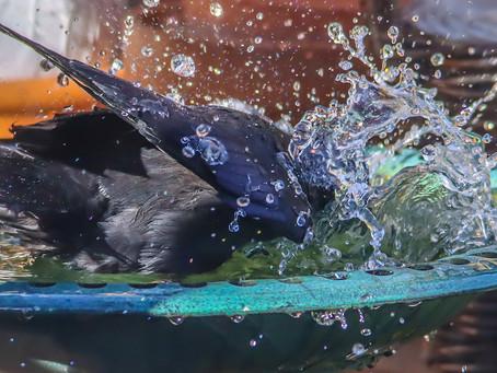 Bird photography, through the kitchen window.