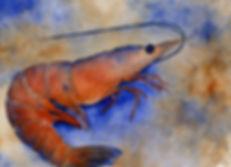 Seafood Series - Shrimp.jpg