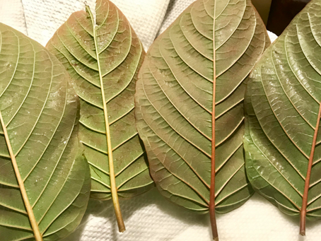 What Kratom Strain is Best for Me?
