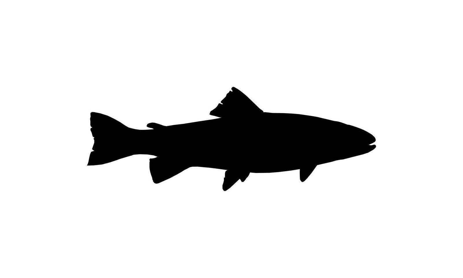Privat heldags fisketur