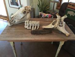 table of bones.jpg