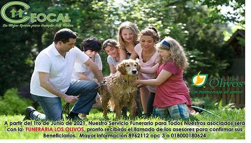 LOS OLIVOS2.jpg