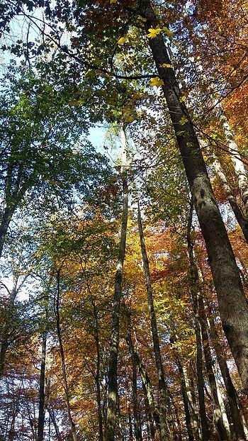 Herz im Wald - Uta Karen Mempel