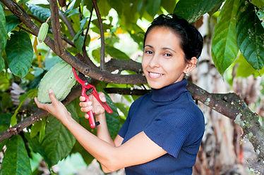 Image of a female farmer in Ecuador cutting a cacao pod off of a tree